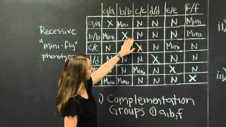 Complementation (Part II) | MIT 7.01SC Fundamentals Of Biology