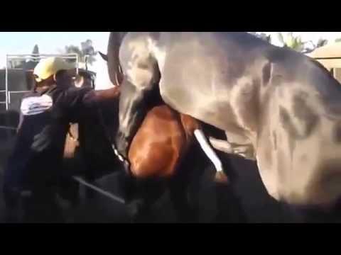 Funny Animal Mating 129 Attack Funny   Animal Mating & Breeding Videos