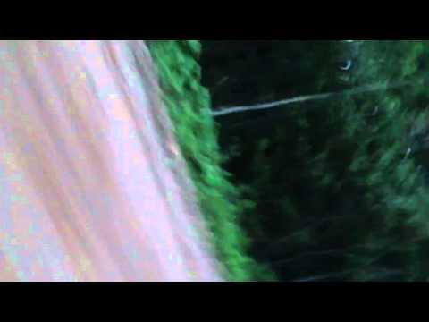 Зверское нападение бобрика (видео)