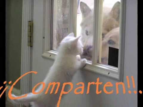 La Navidad de Perros y Gatos