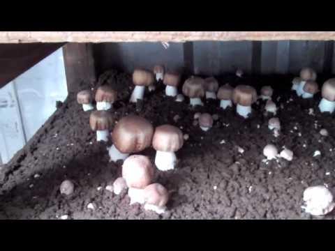 Mountain Meadow Mushroom Farm - How They Grow