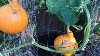 Abondance du jardin mandala de permathérapie