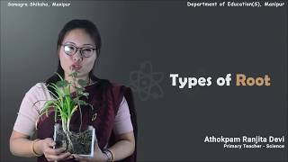 Chapter 7 (Part 5 of 6) - Getting to know Plants