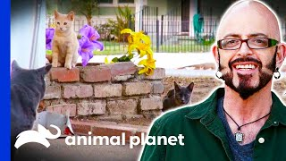 Jackson Helps A Neighbourhood With Their Feral Cat Problem | My Cat From Hell by Animal Planet