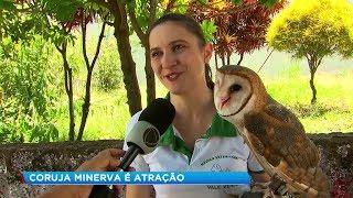 Veterinária tem coruja de estimação em Marília