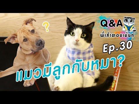 แมวมีลูกกับหมาได้ไหม?