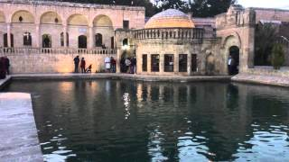 Sanliurfa Turkey  city photos : The fish lake in Sanliurfa Turkey