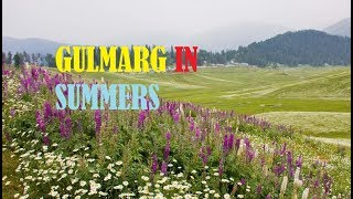 """Gulmarg is located west of Srinagar at a distance of around 50 kilometers and nestled on an altitude of 8,500 ft.. The drive from Srinagar to Gulmarg will take approximately one hour depending on the traffic. From Sonamarg it will take around 3 hours to reach Gulmarg.It´s not just a ski resort in winter. No it´s definitely worth a visit in summer. With pleasant temperatures around 20 – 30°C, Gulmarg is perfect for outdoor activities like trekking, mountain biking, horese riding fishing or golfing. Yeah that´s right Gulmarg has the highest golf course in the world.Gulmarg means """"meadow of flowers"""" if you translate it. And of course so it is. It´s beautiful lush green surrounded by pine trees and high rising mountains. Just an impressive scenery. Gulmarg has been the location for shooting of lots of Bollywood movies.Apart from that you can ride the worlds highest Gondola up to the 14,000 ft high Mt. Apharwat.Also if you just go down a little bit from Gulmarg towards Tangmarg you will bump into Baba reshi which has a shrine and Baba reshi is a typical kashmiri village.The hotels are built in a typical design only found in Kashmir. Most of them are covered in pine wood and have colorful roofs. All hotels are outfitted with a so called """"Bhukari""""  which is a typical wood fired oven in the living room. It gives the room a very cozy and warm feeling if needed in summer. After a tasteful and traditional dinner with herbs, spices and meal combinations you'll find nowhere else in this world you can enjoy for e.g. the markets in Gulmarg """"downtown"""" and buy some souvenirs or just get some food if you like to._________________________________________________________________This channel is to Entertain the people , we don't have any intention to hate or insult anyone in this video.----------------------------------------------------------------------------------------------------------Copyright Disclaimer Under Section 107 of the Copyright Act 1976, allowance is made for """"fair use"""""""