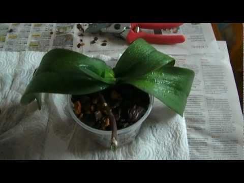 Orchideen Pflege: