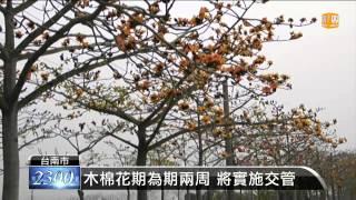 白河林初埤木棉花節 3/14登場