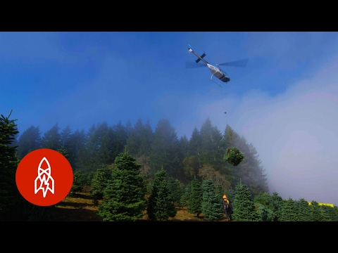 harvesting one million christmas trees by helicopter - Big Lots Christmas Commercial