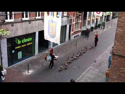0 Una banda musical de patos