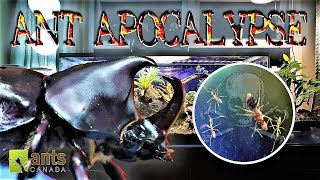 Video Ant Apocalypse Stopped by a Rhino Beetle MP3, 3GP, MP4, WEBM, AVI, FLV Maret 2019