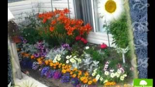 Цветник в саду. Часть 1