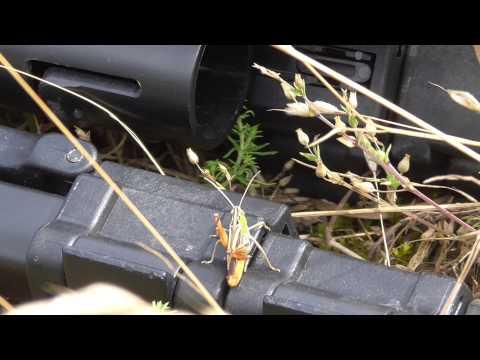 How Grasshopper makes noise 15Jul15 RAF Lakenheath UK 353p