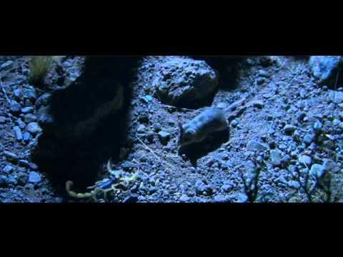 Hidden Kingdoms 1 clip2