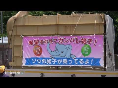 """ゾウの「姫子」が""""嫁入り"""""""