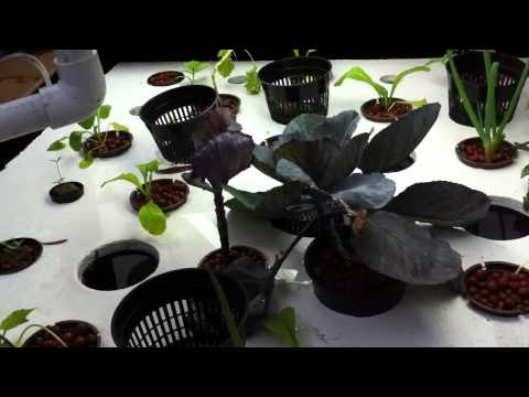 How To Choose The Best Grow Lights for Your Aquaponic System