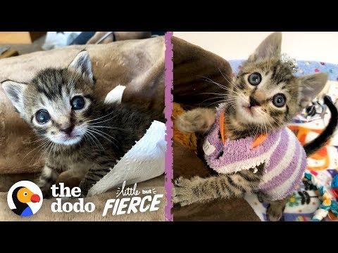 Kitten Has to Wear Socks as Sweaters After Surgery