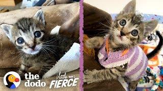 This Tiny Kitten Wears Socks As Sweaters | The Dodo Little But Fierce by The Dodo