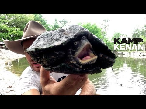 WHAT should you FEED MAP TURTLES?