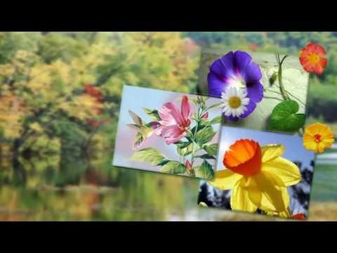 слайд шоу цветы