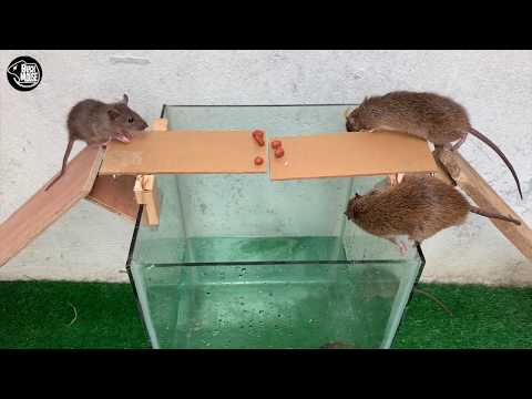 Rat Trap Water 🐀 12 Mice in trapped 1 Hour 🐭 Mouse/ Rat trap 👍 How to Make Rat Trap ???