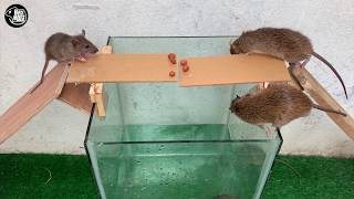 Video Rat Trap Water 🐀 12 Mice in trapped 1 Hour 🐭 Mouse/ Rat trap 👍 How to Make Rat Trap ??? MP3, 3GP, MP4, WEBM, AVI, FLV Juli 2019