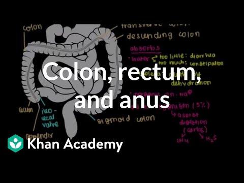 Human anus Bacteria