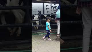 Video Khaira liat sapi di farm house lembang MP3, 3GP, MP4, WEBM, AVI, FLV Juni 2019