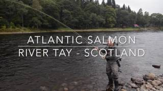 The powerful River Tay salmon - how to land one