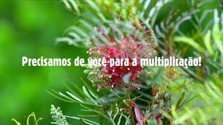 Multiplica! - cultivando a sabedoria da terra (Apoie!)