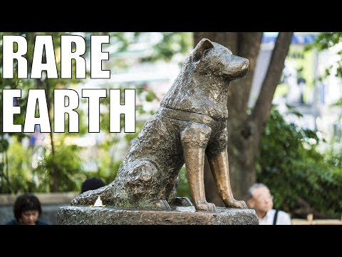 How a Loyal Akita Named Hachiko Became the Most Famous Dog in the