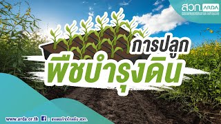 การปลูกพืชบำรุงดิน