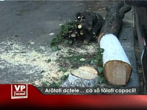 Arătaţi actele… ca să tăiaţi copacii!