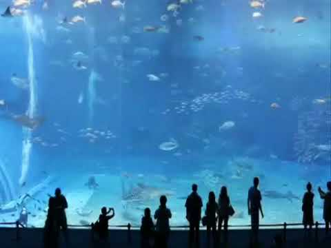Deva Premal and Miten - Gayatri Mantra, Kuroshio Sea - 2nd largest aquarium tank in the world :-))