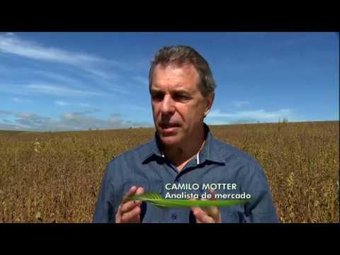 Agricultores colhem safra de grãos nas principais regiões produtoras do país