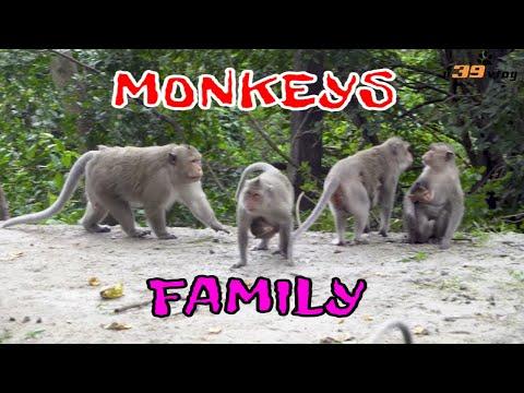 Con Khỉ - Live Dictionary