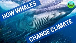 How Whales Change Climate.....