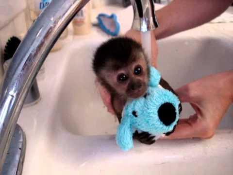 這隻小猴子怎樣都不想洗澡,直到她知道…可以帶上她的洗澡好朋友。