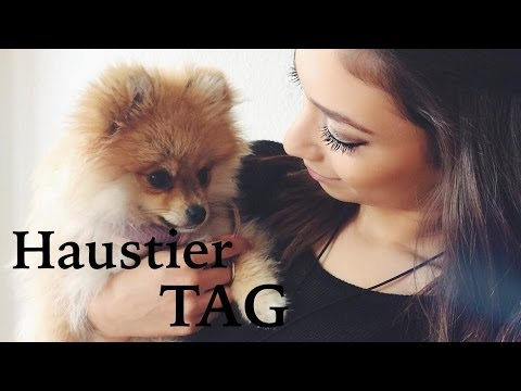 Haustier - Hallo meine Lieben ♡ Sorry, das es so unscharf ist ich hoffe, das euch das Video gefallen hat ♡ Frage an euch: Habt ihr ein Haustier ? was für eins ? ♡ Frage...