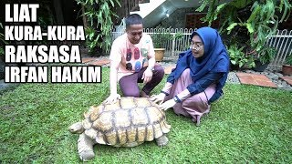 Download Video Hampir Di Seruduk Kura-Kura Raksasa Irfan Hakim😅 - Ricis Kepo MP3 3GP MP4
