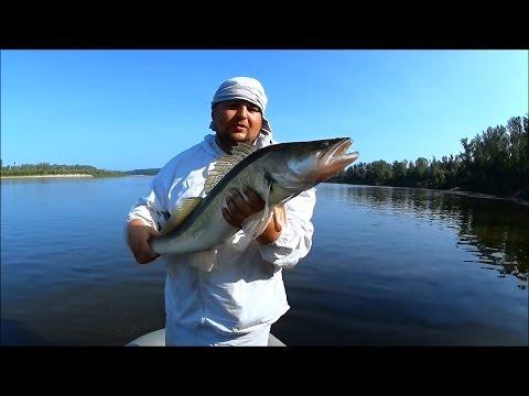 диалоги о рыбалке на джиг
