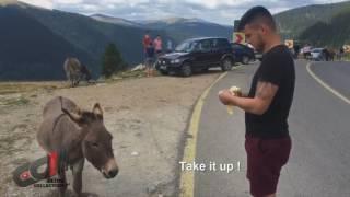 Donkey eating banana in Romania - Transalpina