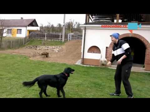 Pes hraje fotbal