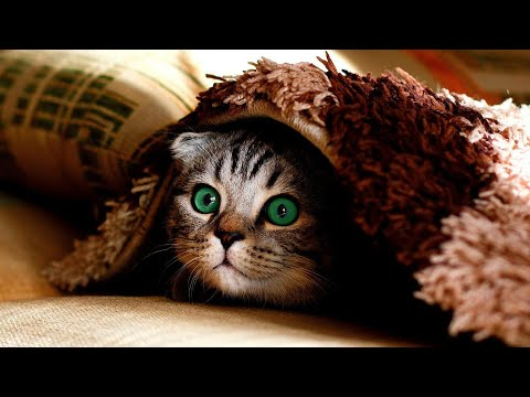 Cute and Funny Cat Videos 😍to Keep You Smiling😁🐱❤#3