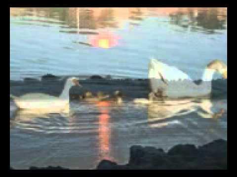 01-03-2013 _ Sex _ II Quaresma _ Mt 21,33-43 45,46_P (видео)