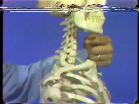 Röntgenanatomie: Die Schulterregion