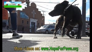 Homeless dog eating from a pile of trash finally gets rescued by Hope For Paws. by Hope For Paws