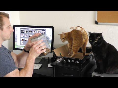 il gatto non vi permette di lavorare? ecco la soluzione!